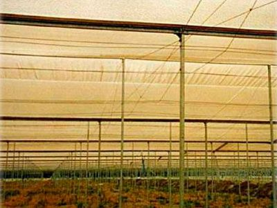 Beniplast Benitex - Agrotextiles - Antiinsects