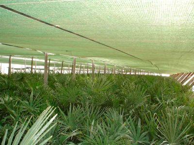 Beniplast Benitex - Agrotextiles - Benishade1