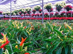Beniplast Benitex - Agrotextiles - Benishade2
