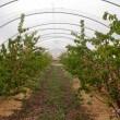sobre explotación agrícola que es