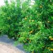 plantar árboles y arbustos