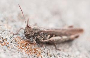 grasshopper-462572_640