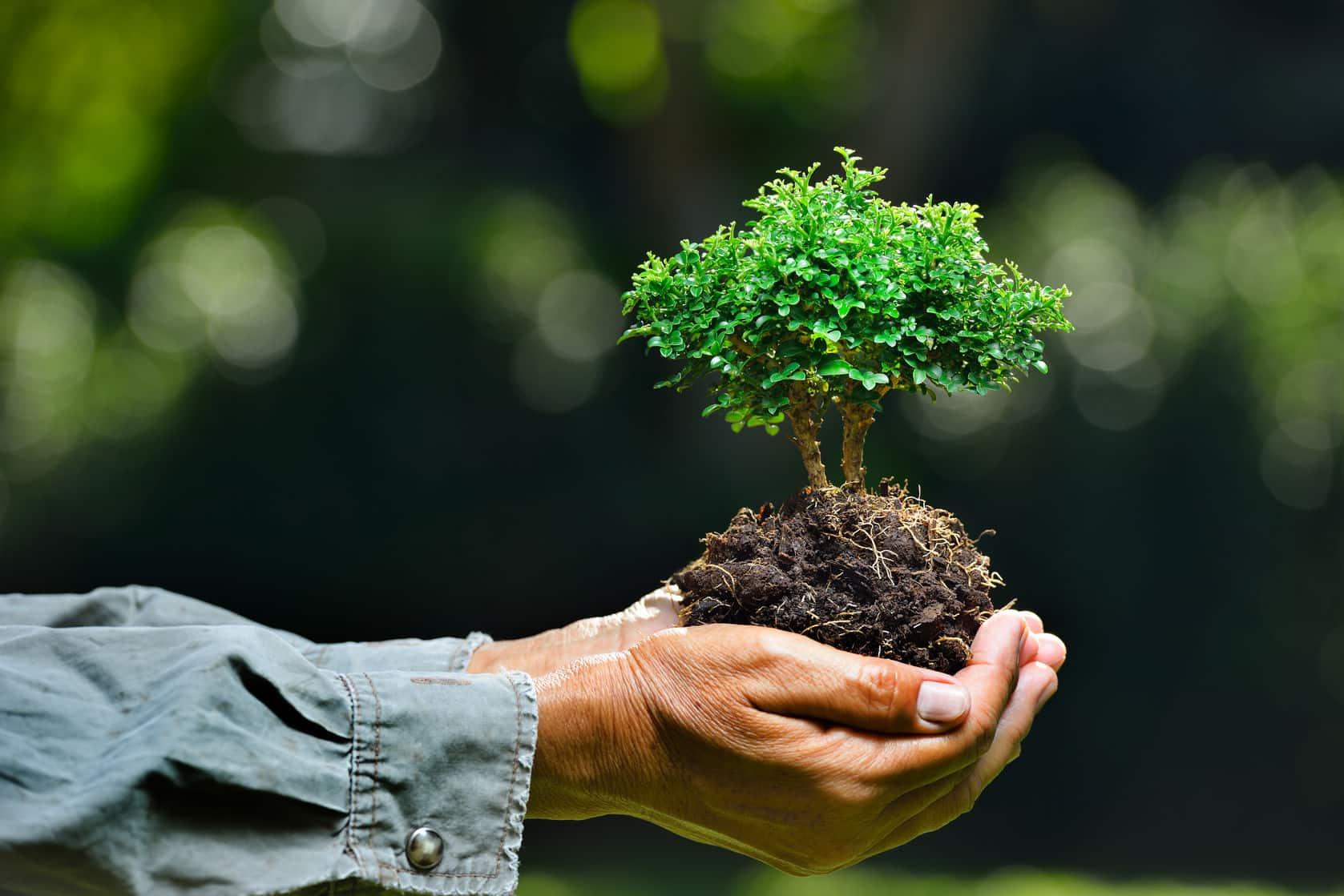 Manos agarrando un árbol pequeño