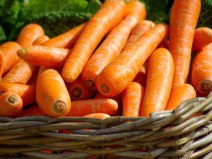 cultivos zanahorias