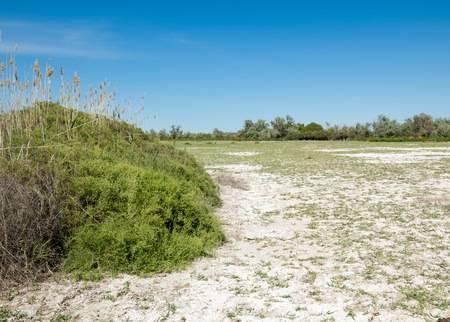 suelos salinos