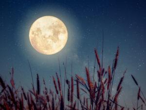 luna y cultivos