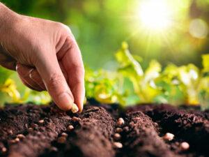cultivos marzo recomendaciones