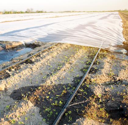 calor proteger cultivos