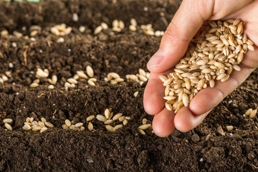semillas reproducción cultivos